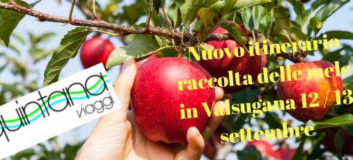 Raccolta delle mele in Valsugana 12-13 settembre