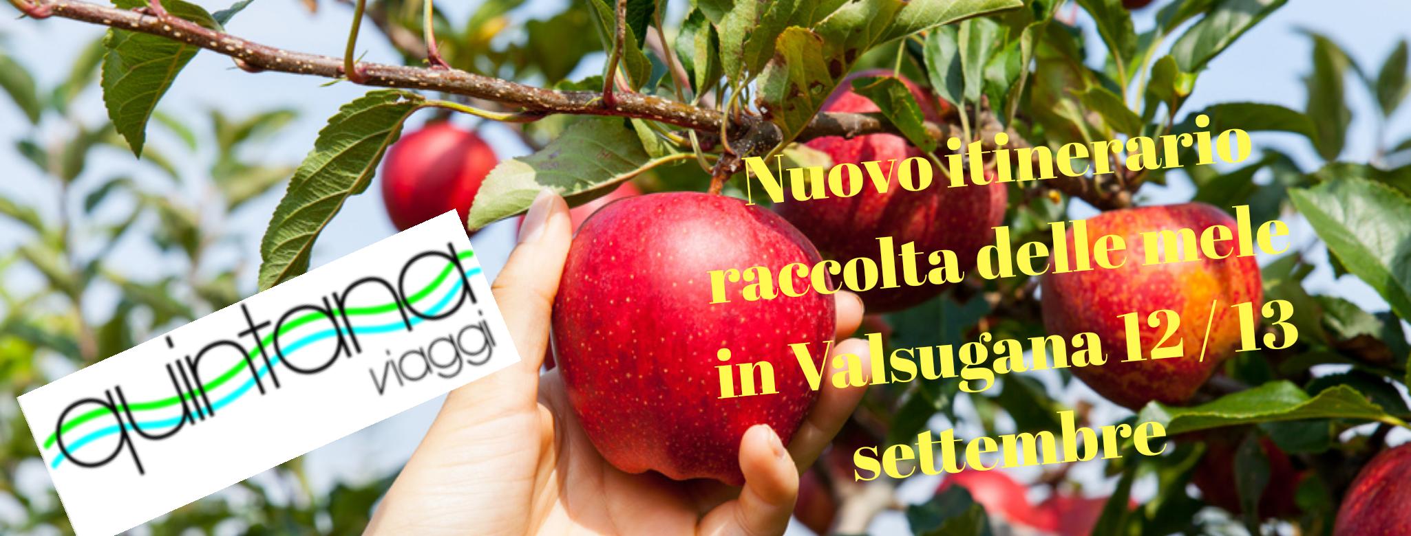 Raccolta delle mele in Valsugana